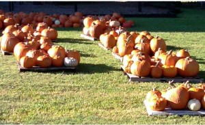 Christ Episcopal Church - Annual Pumpkin Patch