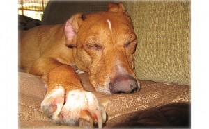 sleepy_boo_couch