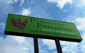 pinecone_perrenials_veggies