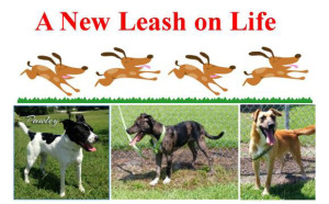 New Leash on Life Program