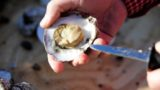 Great Oyster Revival