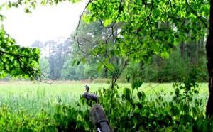 Turkey Hunting New Bern