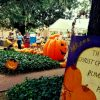 Pumpkin Patch at Christ Church