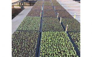 Grow Spring Vegetables