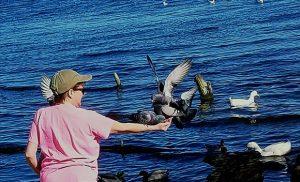 Feeding birds at Union Point Park