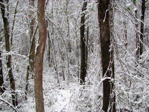 Winter Scene by Elena Treschan