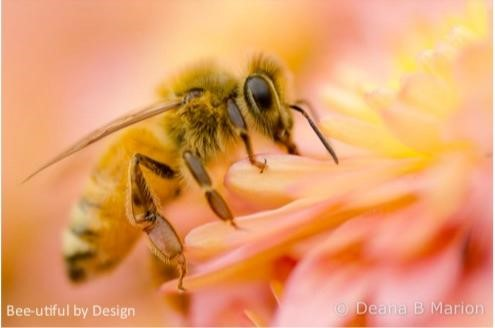 Bee-utiful by Design © Deana Marion