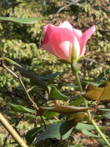 Fall Blossom New Bern